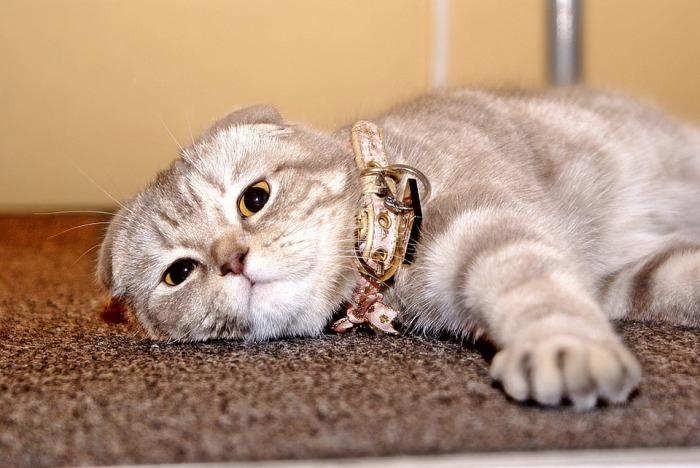 cat-775717_960_720